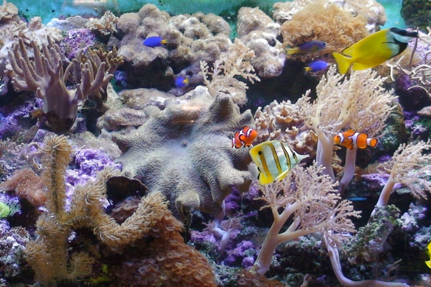 Aqua Zoo Leerdam