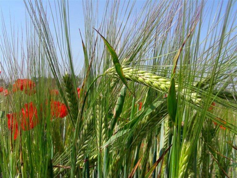 """""""Natuurlijke landbouw heeft toekomst"""""""