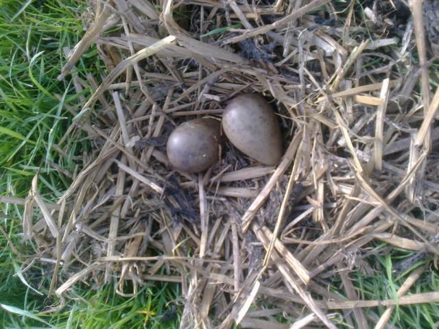 Grutto Nest