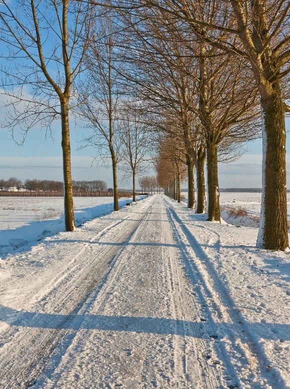 Winterwandeling door de polder
