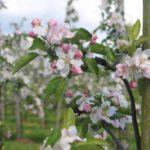 Fruitteelt- En Loonbedrijf A. En J.A. Van Dijk VOF
