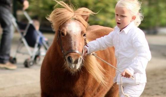 Paardenmarkt Ameide 2020