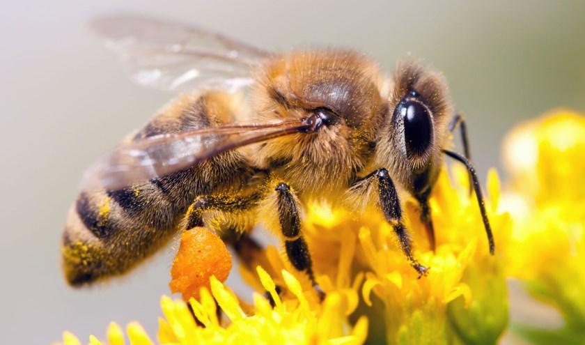 Bijenhouden