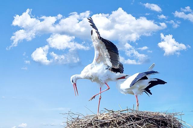 Stork 838424 640
