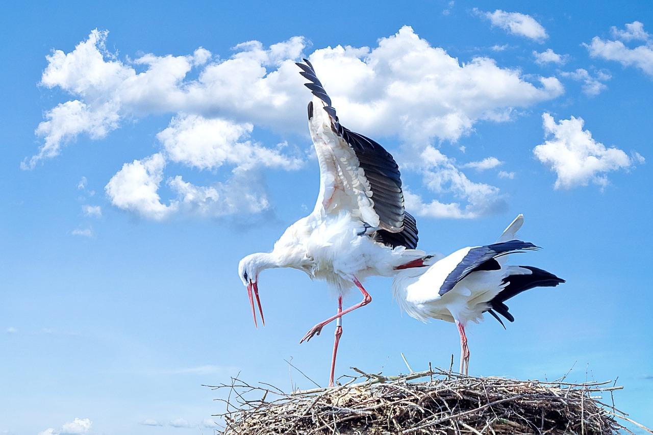 Stork 838424 1280