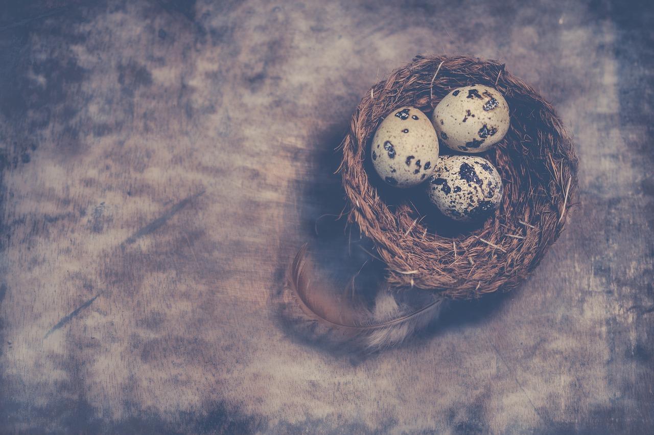 Eggs 3091339 1280