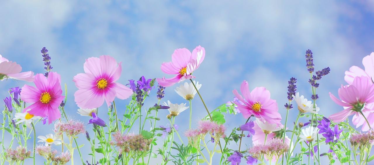 Wild Flowers 571940 1280