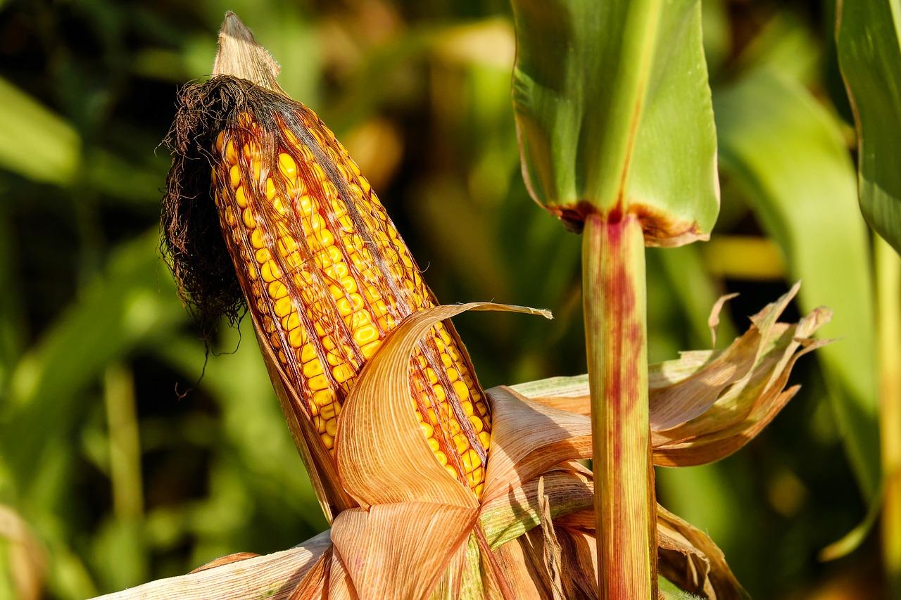Achterhoeks Offensief Tegen Alle Negativiteit Over Boeren