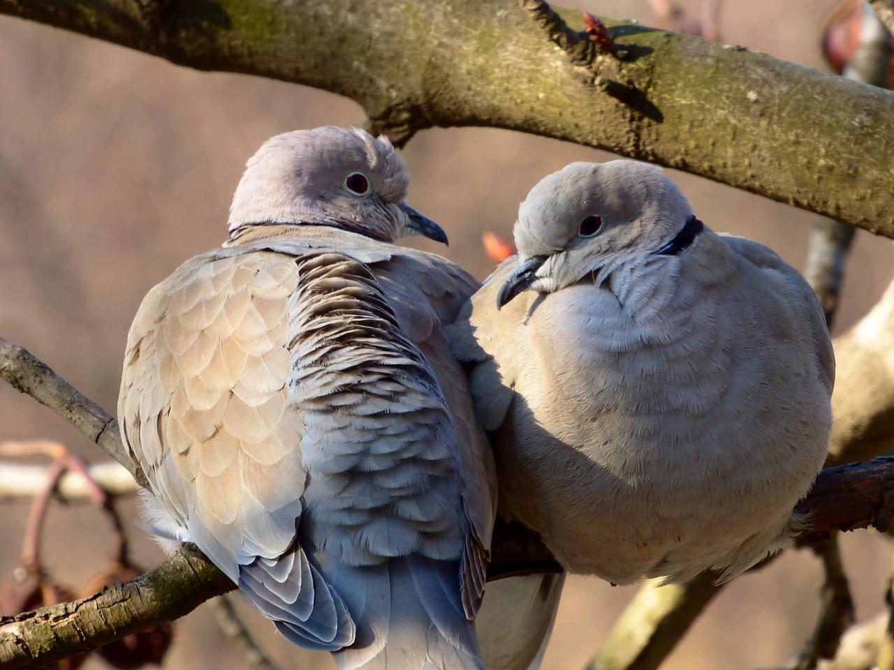 Bird 706801 1280
