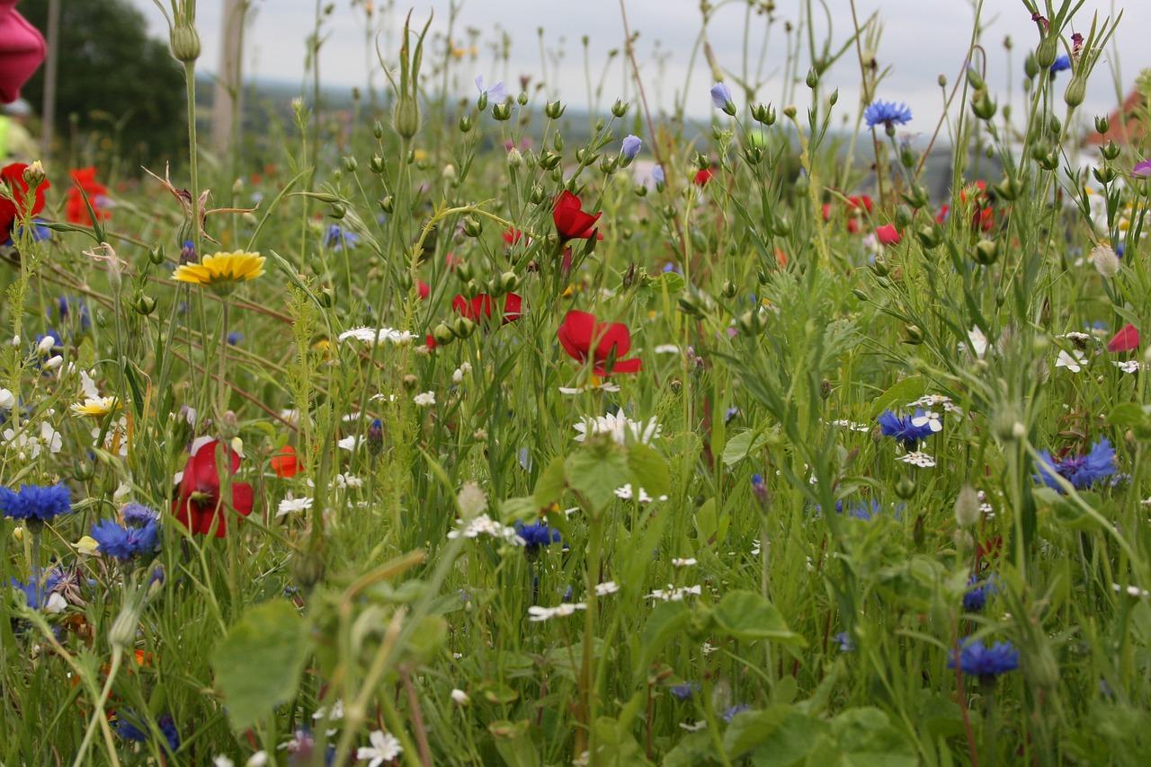 Field Flowers 2356628 1280