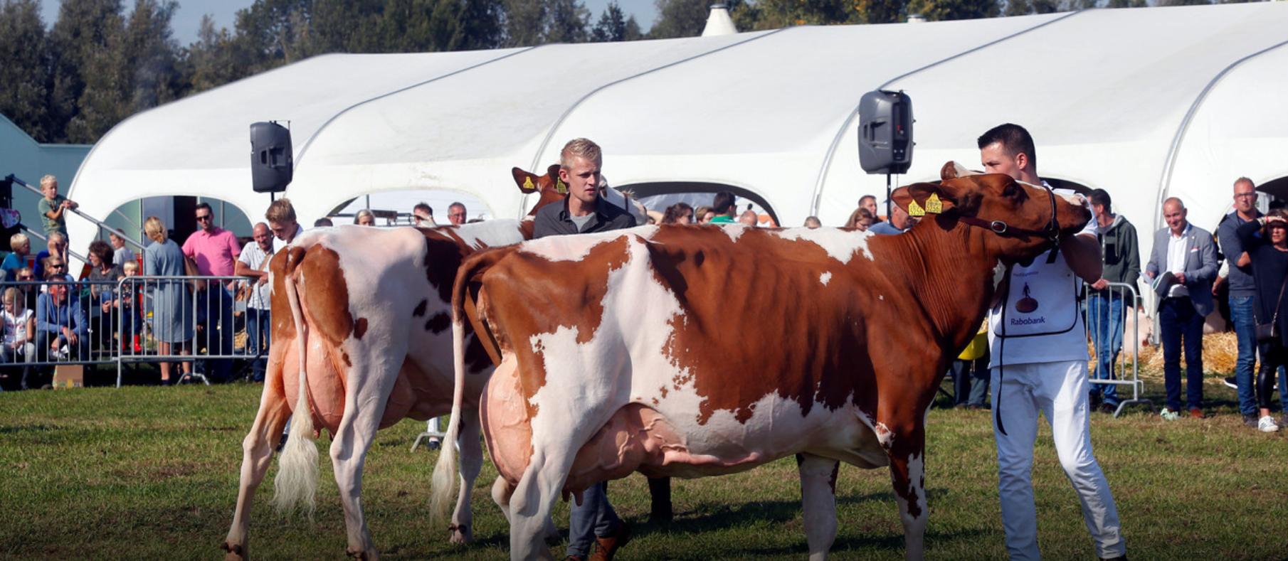 Koeienkenner