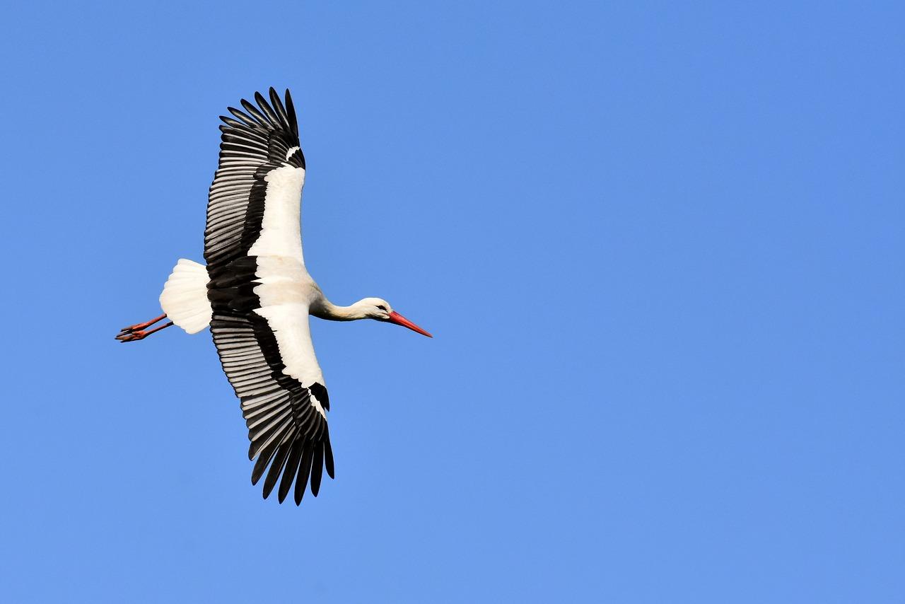 Stork 3363503 1280