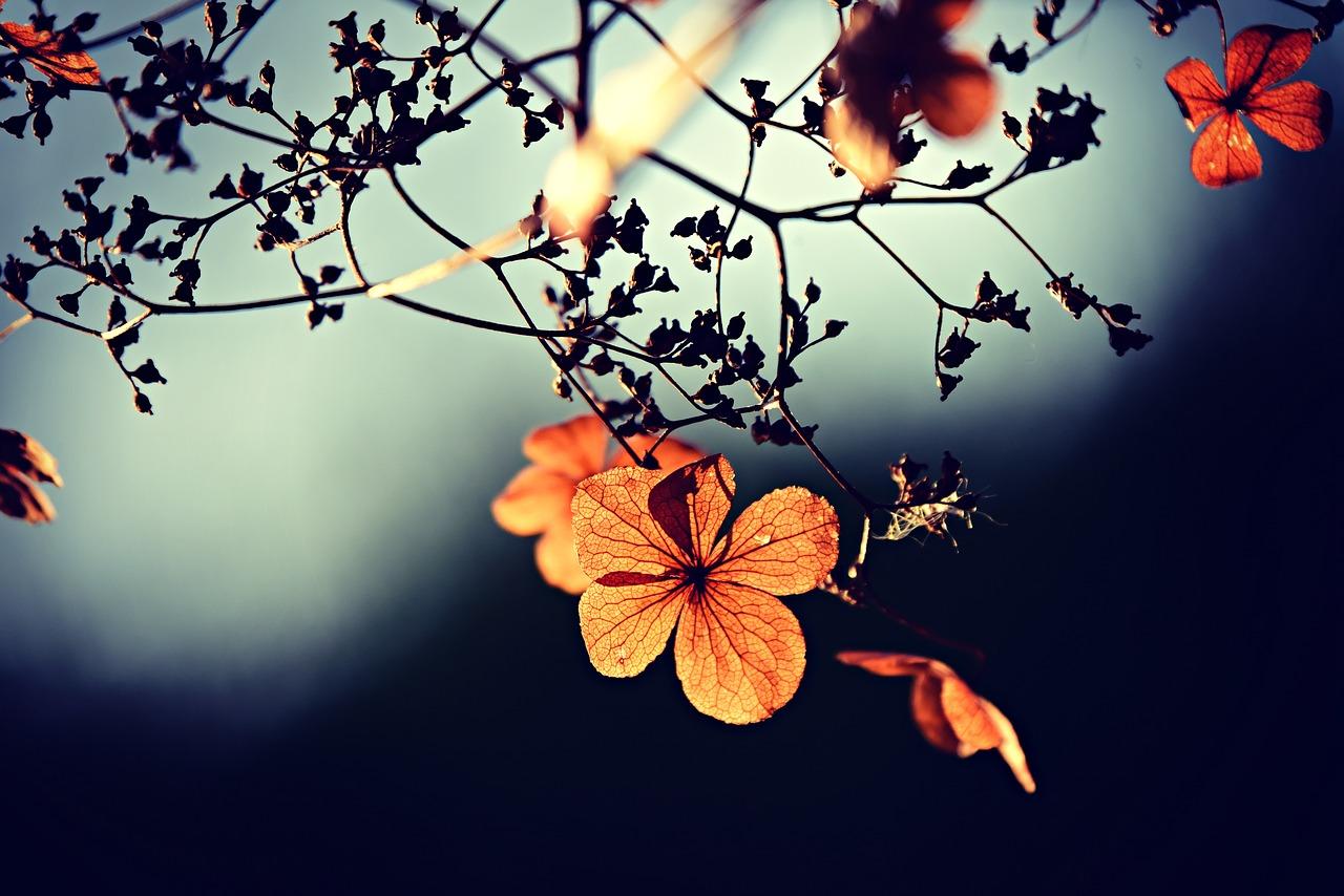 Speuren naar de herfst bij de NVWA