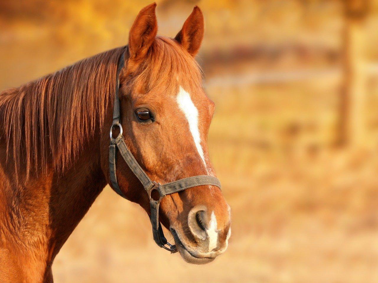 Paardenmarkt Vianen 2020
