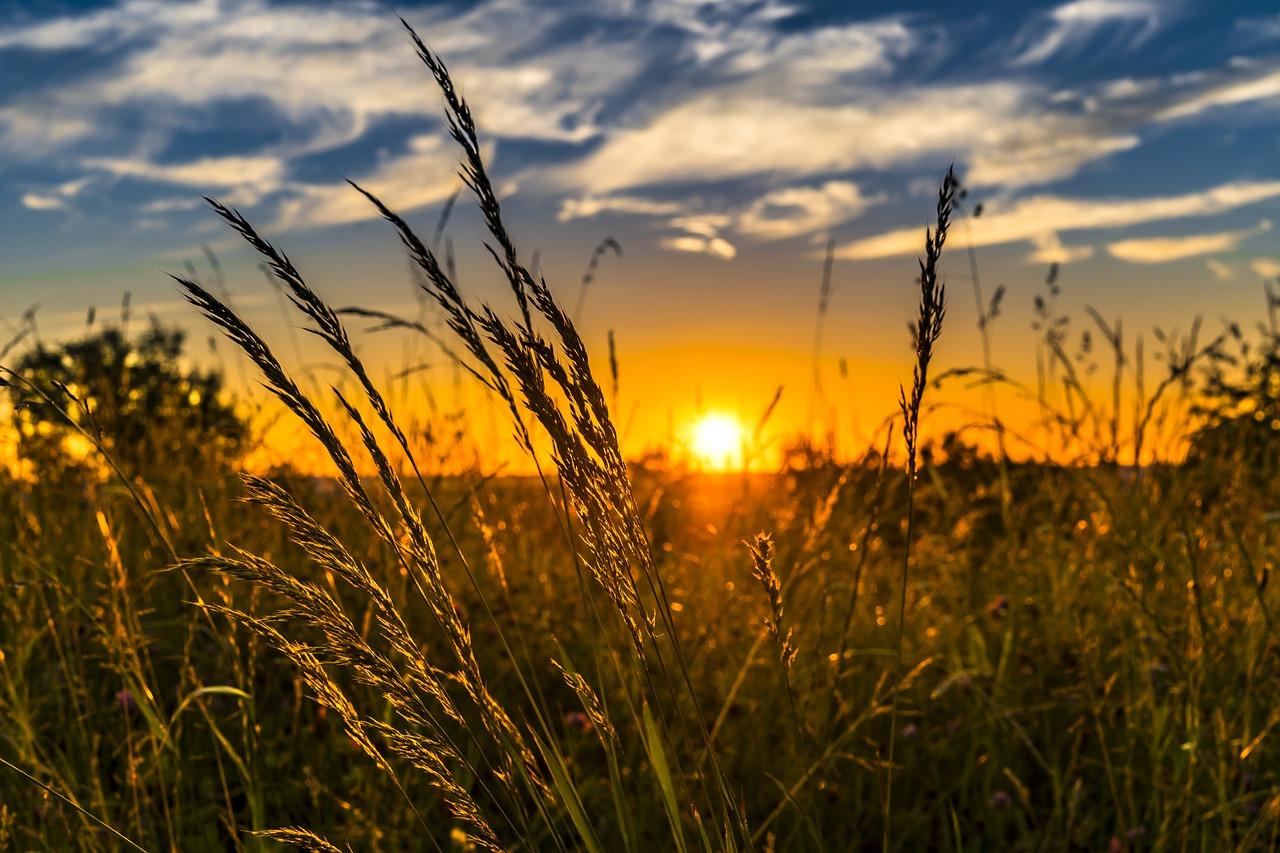 Lezing en dialoog over duurzame landbouw