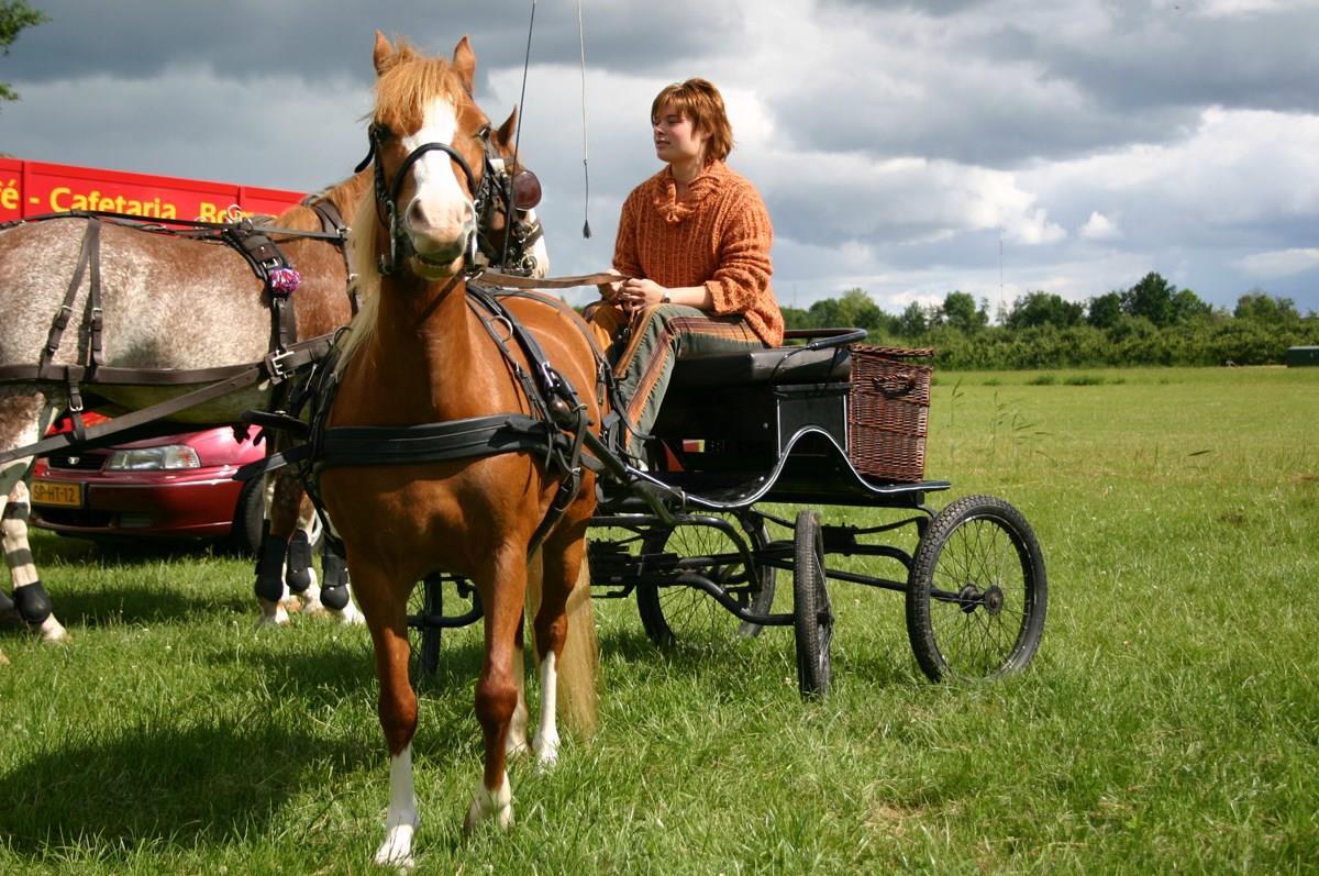 Zederikdagen 2020: Paarden & Wagens
