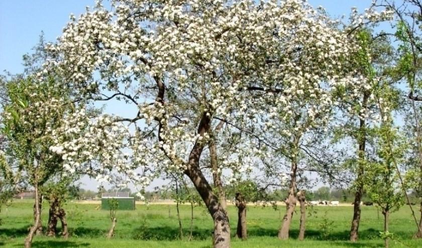 Snoeicursus fruitbomen van Den Hâneker