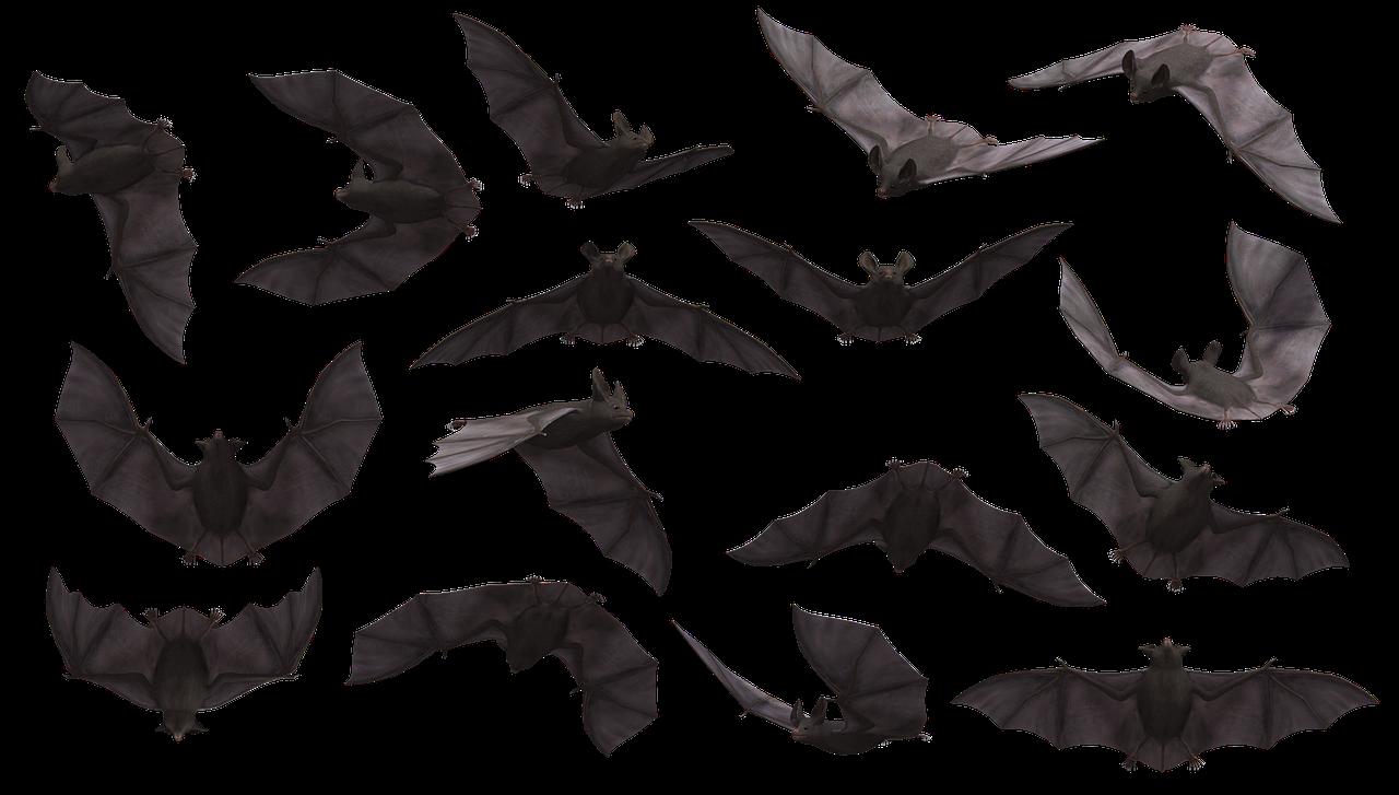 Bat 3369882 1280