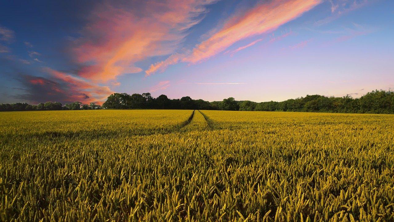 Nieuw Europees Landbouwbeleid In Verdrukking