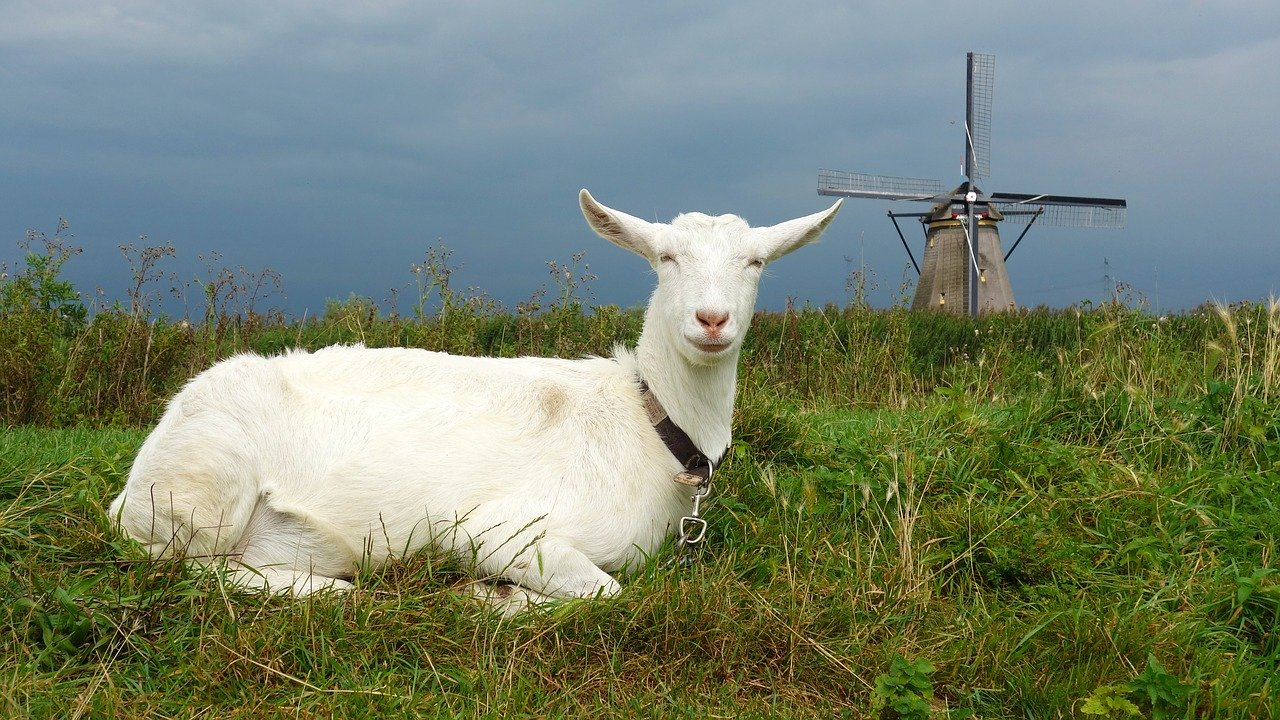 Goat 2752693 1280