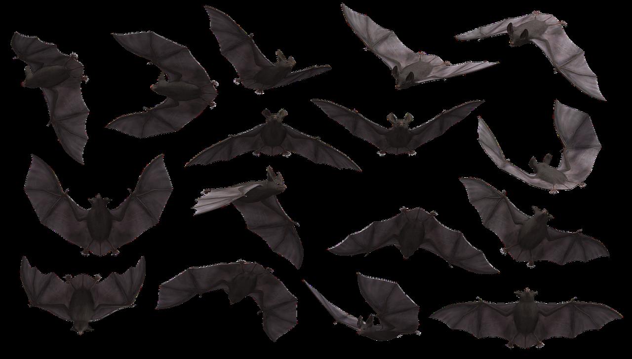 Op zoek naar vleermuizen bij de Schaapskooi Schoonrewoerd
