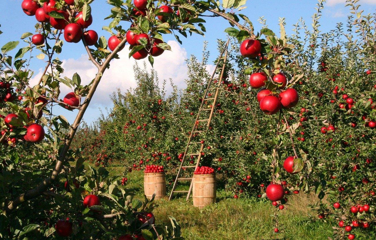 Fruitplukdag in de boomgaard bij het Natuurcentrum
