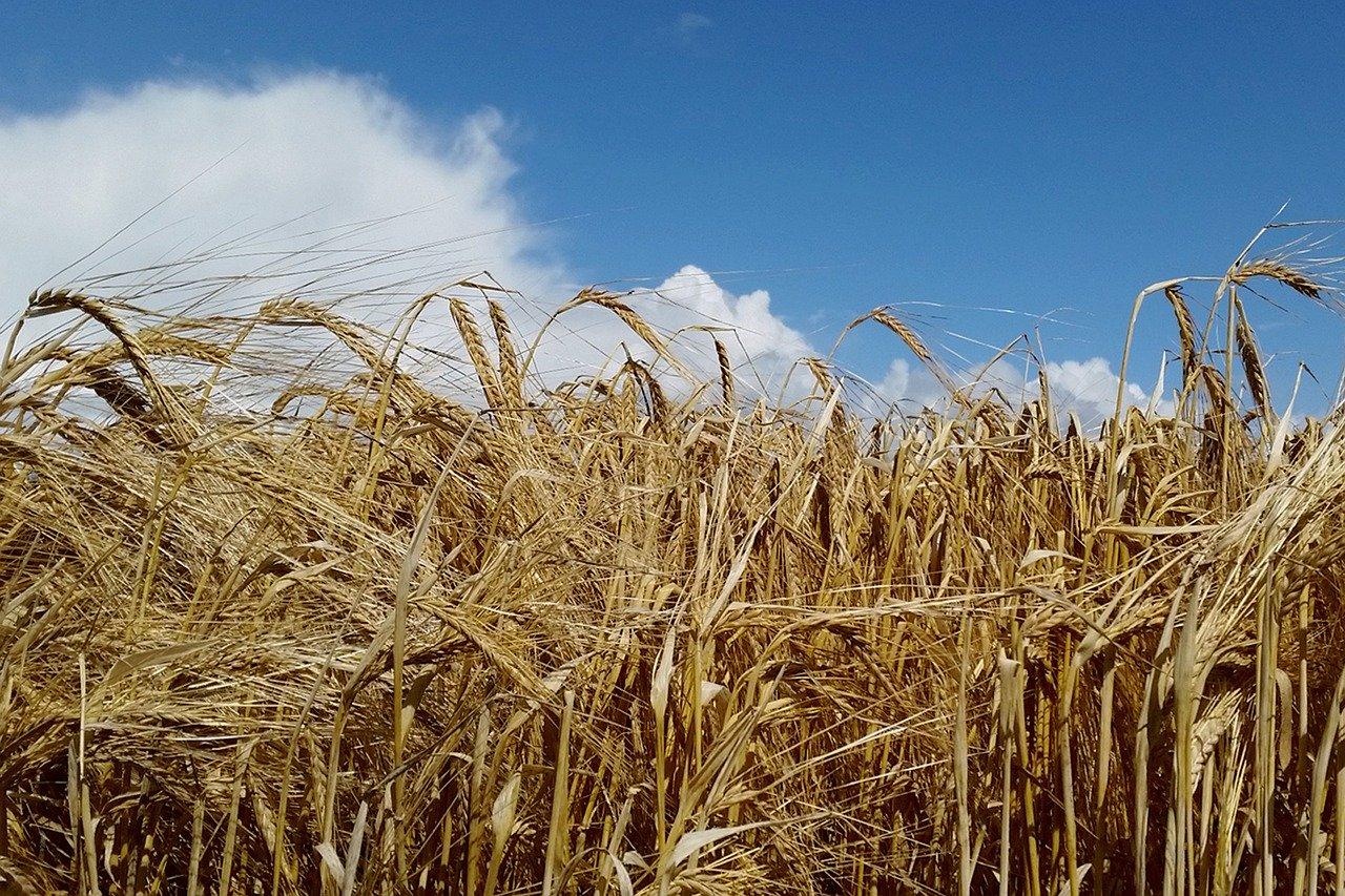 Artikel Agraaf: Nederland Heeft Te Weinig Landbouwgrond Om Eigen Bevolking Te Voeden