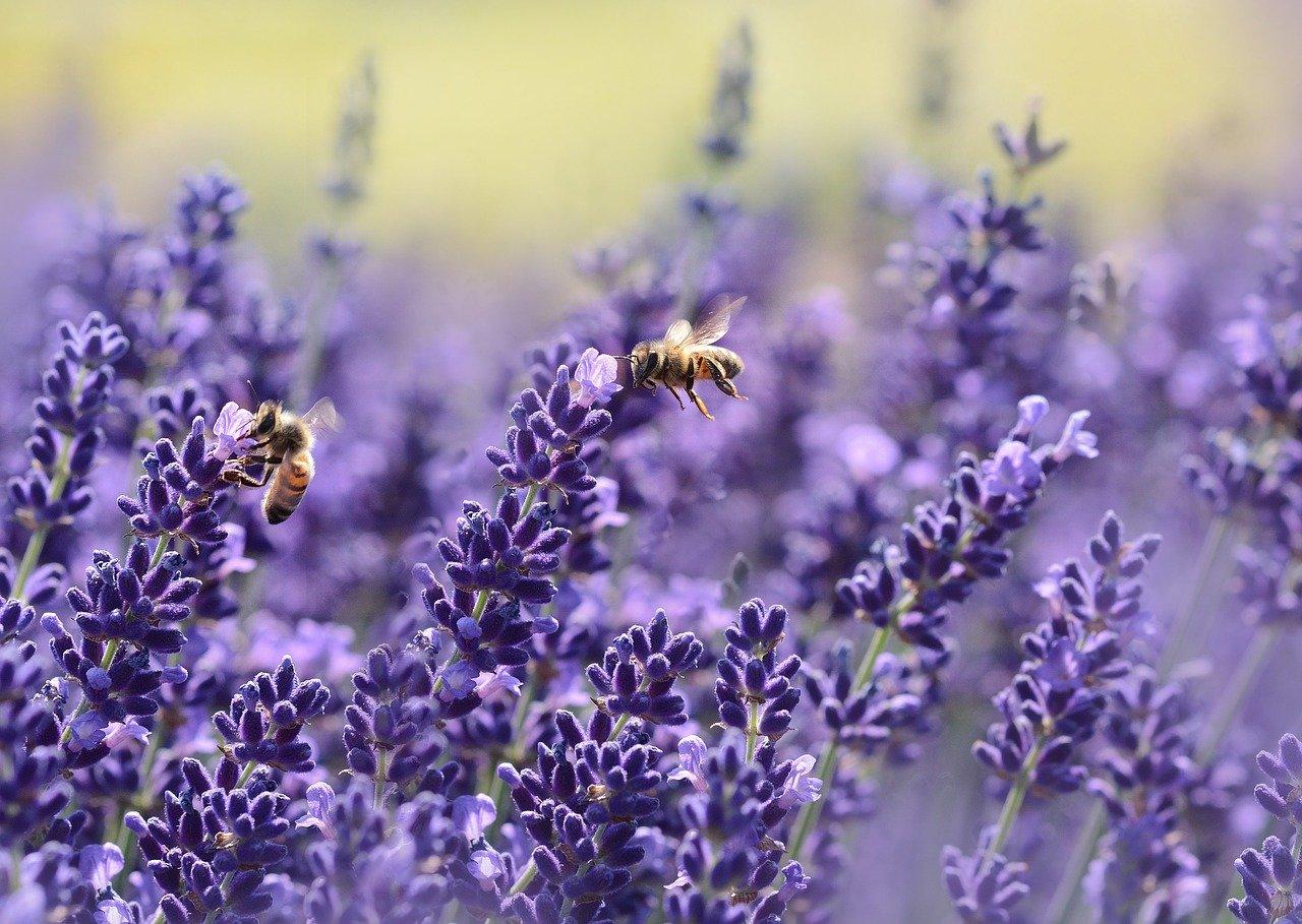 Artikel LTO: Boerenerf Moet 'Place To Bee' Worden