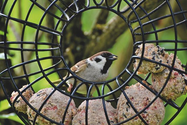 30/12: Jeugdactiviteit de Schaapskooi - Vogels in de Winter en vetbollen maken